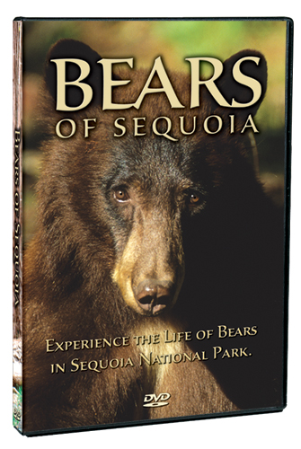 Bears of Sequoia Nationl Park
