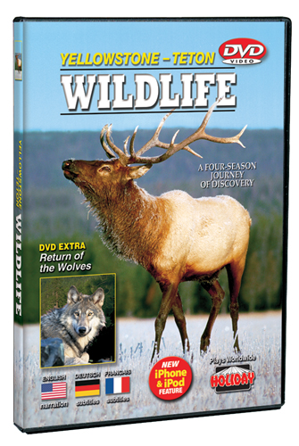 Yellowstone-Teton Wildlife DVD